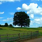 Peacefull Tree on a Summerday by Brevis