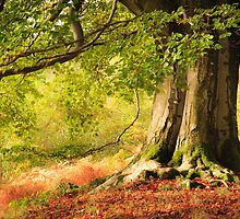 Autumn Beech in Cumbria by Joe Wainwright