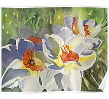 Daffodils in Sunshine Poster