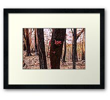 Regeneration - Mount Wilson & Mount Irvine - The HDR Experience Framed Print
