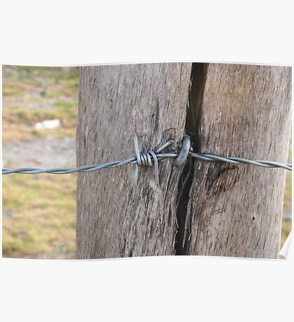 Barbed Wire in a Fence Pole Poster
