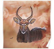 Nyala Antelope. By Jane Flowers Poster