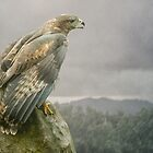 Land of The Buzzard by Tarrby