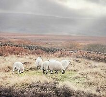 Sheep On Danby Low Moor ~ North Yorkshire by patrixpix