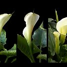 Calla lilies collage II by Madalena Lobao-Tello