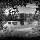 Through the Willows in Mono by Colin Metcalf