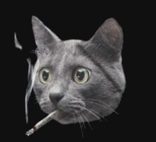 Marijuana Cat by designCENTRAL