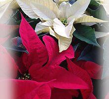 Happy Holidays by GalleryThree