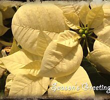 Season's Greatings by GalleryThree