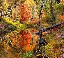 Fairy Tale Autumn by Diana Graves Photography