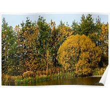 Autumn colours Poster