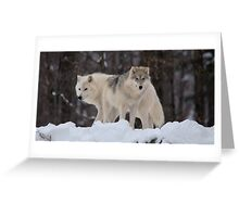 Arctic Wolves - Parc Omega, Quebec Greeting Card