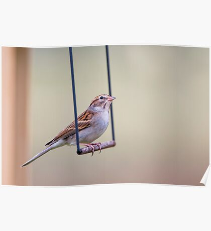 Swinging Sparrow Poster