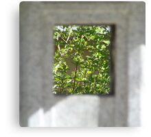 A view of trees Canvas Print