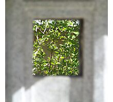 A view of trees Photographic Print