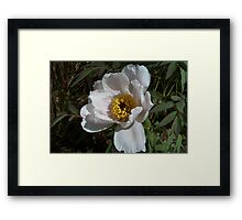 A White Flower Framed Print