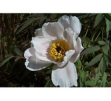 A White Flower Photographic Print