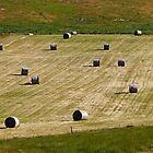 Baled Up by Harry Oldmeadow