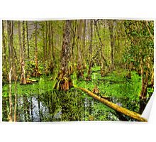 The Everglades in Florida Poster