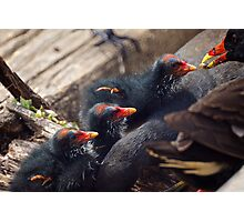 Dinner Time Photographic Print