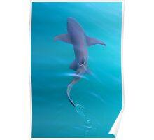Gummy shark Poster