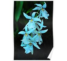 the spotted white orchid Poster