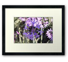 Perfect Purple Framed Print