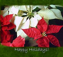 Mixed Color Poinsettias 2 Happy Holidays P1F5 by Christopher Johnson