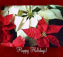 Mixed Color Poinsettias 2 Happy Holidays P5F1 by Christopher Johnson
