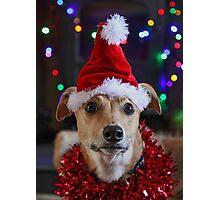 Funny Dog at Christmas Wearing Xmas Santa Hat Photographic Print