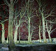 Spinney at Night by fotohebden