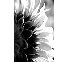 SunKissed in Black and White Photographic Print