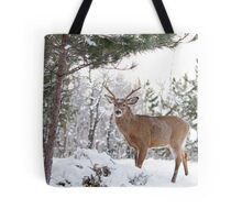 Frosty Buck - White-tailed Buck, Ottawa Tote Bag