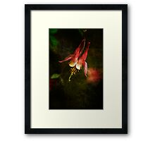 Columbine Orange Woodland Beauty Framed Print