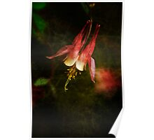 Columbine Orange Woodland Beauty Poster