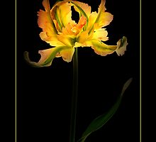 Green Wave Parrot Tulip by didibaev