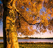 Autumn Gold by Ralph Goldsmith