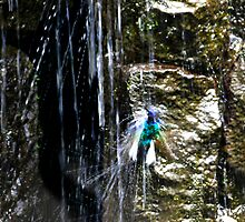 Hummingbird Bathing In Mindo Waterfall by Al Bourassa
