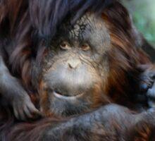 Orangutan Mom and Baby  Sticker
