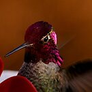 Annas Hummingbird by RoseMarie747