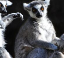 Ring-tailed Lemur Family Sticker