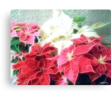 Mixed color Poinsettias 3 Angelic Canvas Print