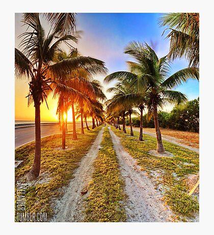Vibrantly Tropical Photographic Print