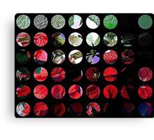 Mixed color Poinsettias 3 Art Circles 1 Canvas Print