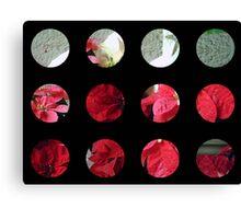 Mixed color Poinsettias 3 Art Circles 2 Canvas Print