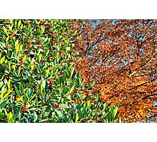 Between Autumn and Winter... Photographic Print