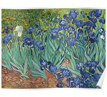 Vincent Van Gogh - Irises,  Impressionism , Flowers 1889 Poster