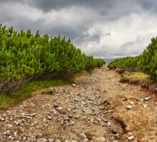 Dirt road through dwarf pines Sticker