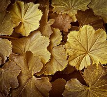 Toasted Lady's Mantle Horizontal by Lee Craig