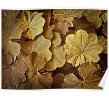 Toasted Lady's Mantle Horizontal Poster